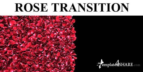 Rose Petal Transition - After Effects Motion Graphics (Videohive)