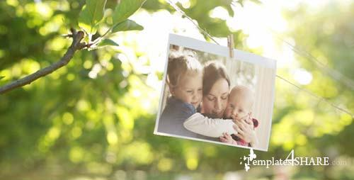 Photo Gallery in a Sunny Orchard - After Effects Project (Videohive)