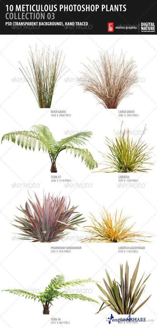 GraphicRiver 10 Meticulous Photoshop Plants Collection 03