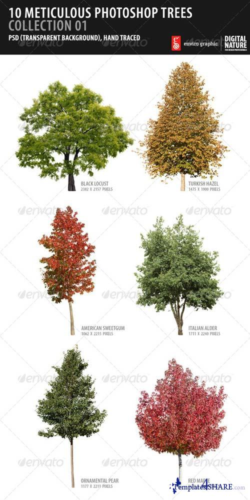 GraphicRiver 10 Meticulous Photoshop Trees Collection 01