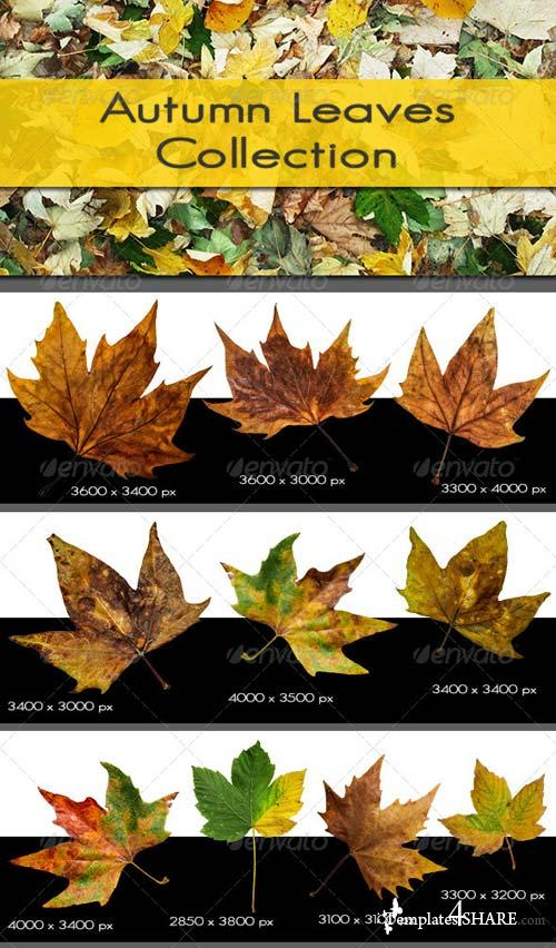 GraphicRiver Autumn Leaves Collection