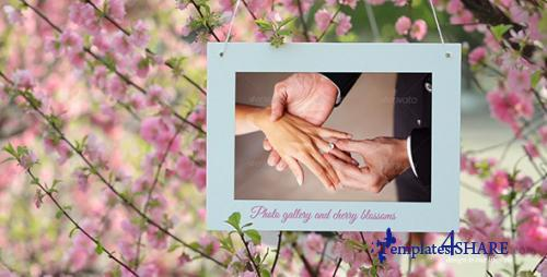 Photo Gallery and Cherry Blossoms - After Effects Project (Videohive)