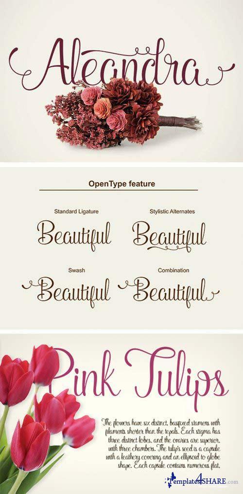 Aleandra Script Font